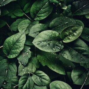 Website by Take A Peak Lef Plus Close up Bladeren met regendruppels